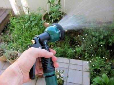 水やり、管理