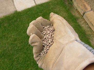 芝生 肥料