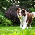 【犬の健康を維持できる】犬が遊べる庭づくりのポイント7つ