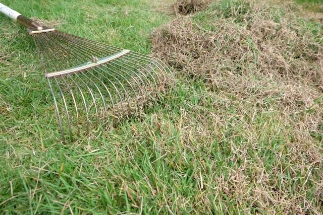 grass-care-kouraishiba