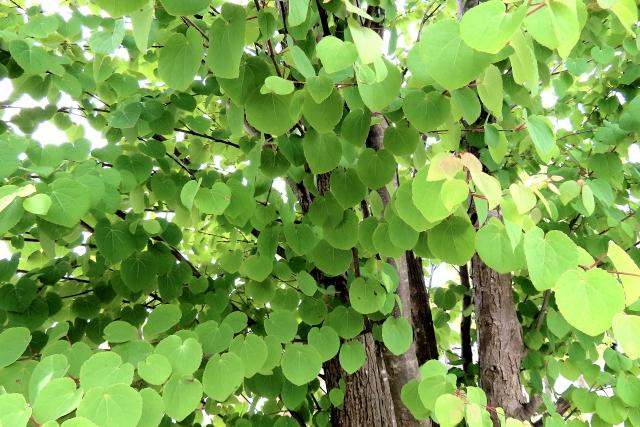 symboltree-osusume-katura